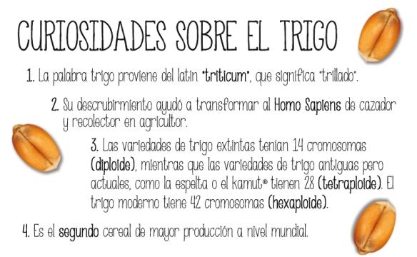 curiosidades_trigo